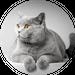 Avatar for kitkat